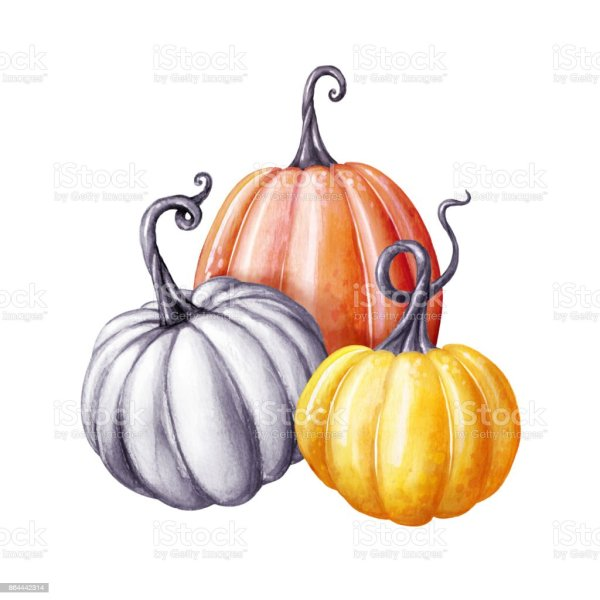 colorful pumpkins thanksgiving