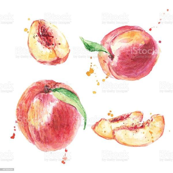 hand drawn watercolor peach fruit