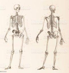 skeleton front and back neck diagram wiring diagramshuman skeleton front and back illustration stock vector art [ 959 x 1024 Pixel ]