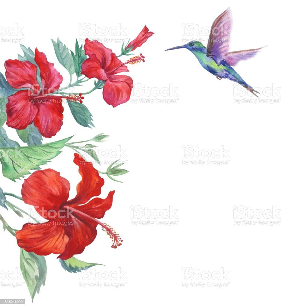 royalty free hummingbird flower