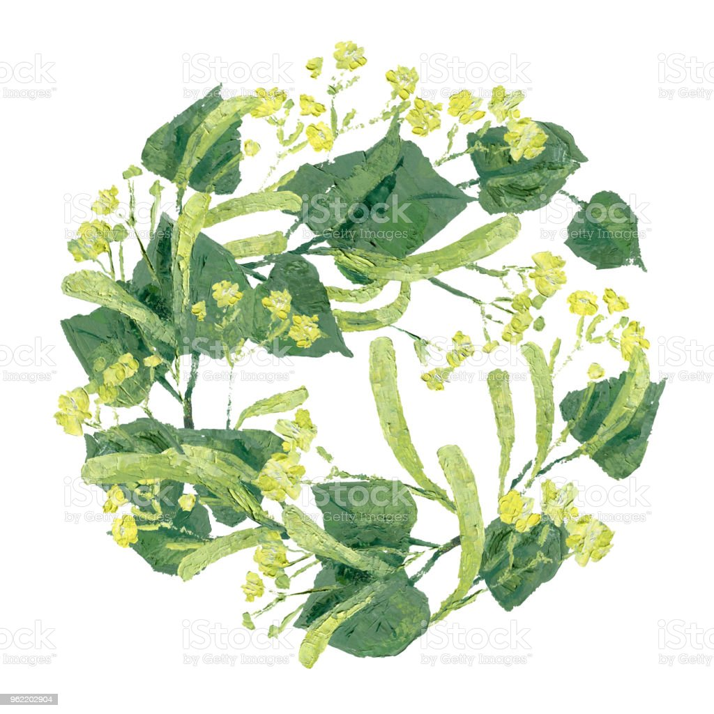 royalty free lime basswood linden
