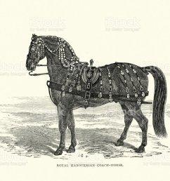hanoverian horse diagram wiring diagram schematics budenny horse hanoverian horse diagram [ 1024 x 820 Pixel ]