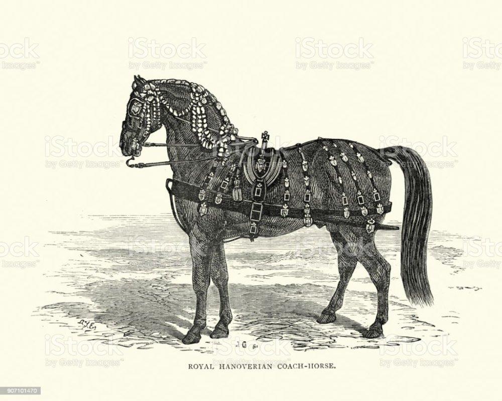 medium resolution of hanoverian horse diagram wiring diagram schematics budenny horse hanoverian horse diagram