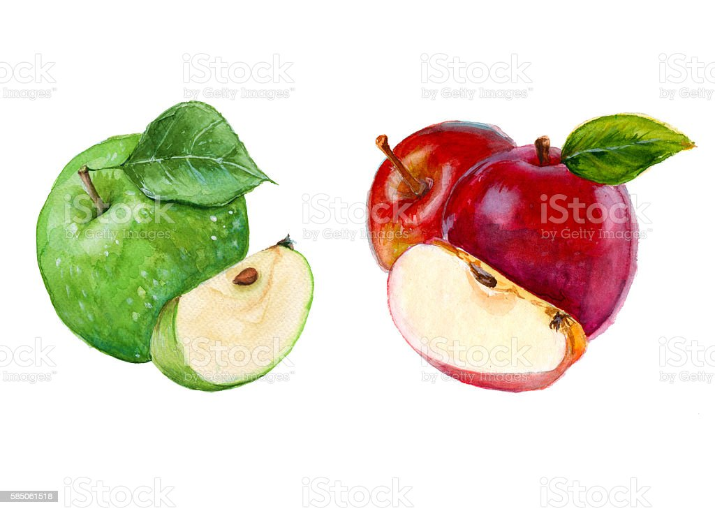 royalty free apple clip art vector