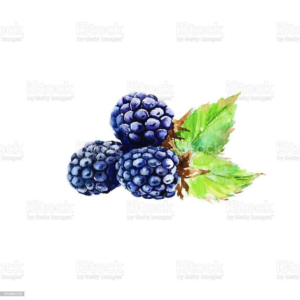 And Black White Raspberry Clip Art