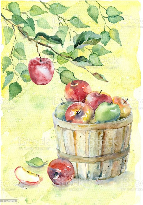 watercolor apples in basket stock