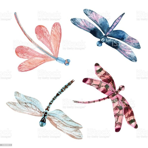 watercolor dragonfly set stock