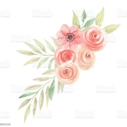 peach flower clip flowers coral floral vector watercolor illustrations blossom tree illustration graphics apple cherry royalty