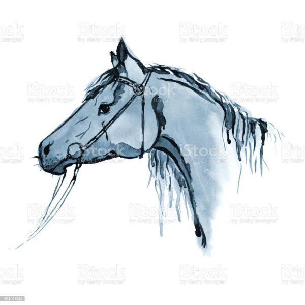 Watercolor Hand Painting Horse Head In Bridle White