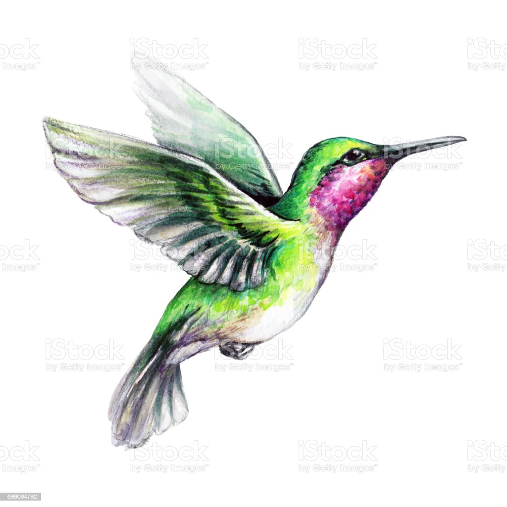 royalty free hummingbird clip art