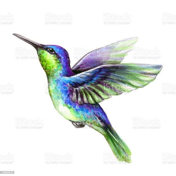 watercolor illustration flying