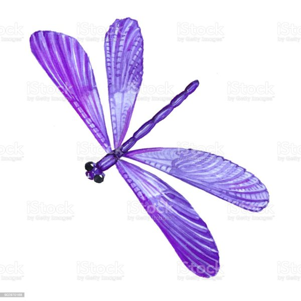 watercolor illustration of dragonfly
