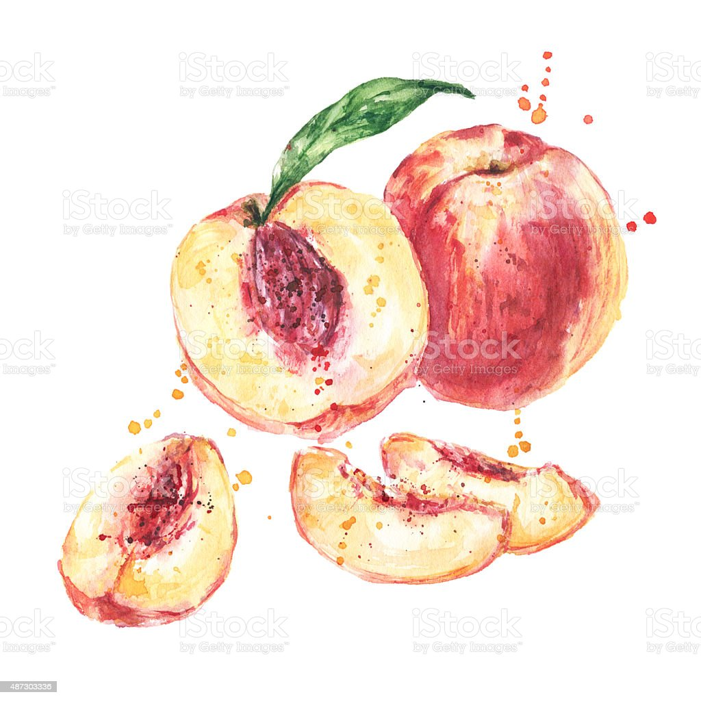watercolor peaches fruit peach
