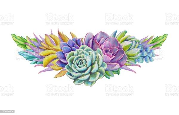 watercolor succulents decorative