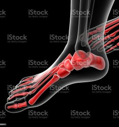 3d rendered illustration of the female foot bone stock image  [ 1024 x 1024 Pixel ]