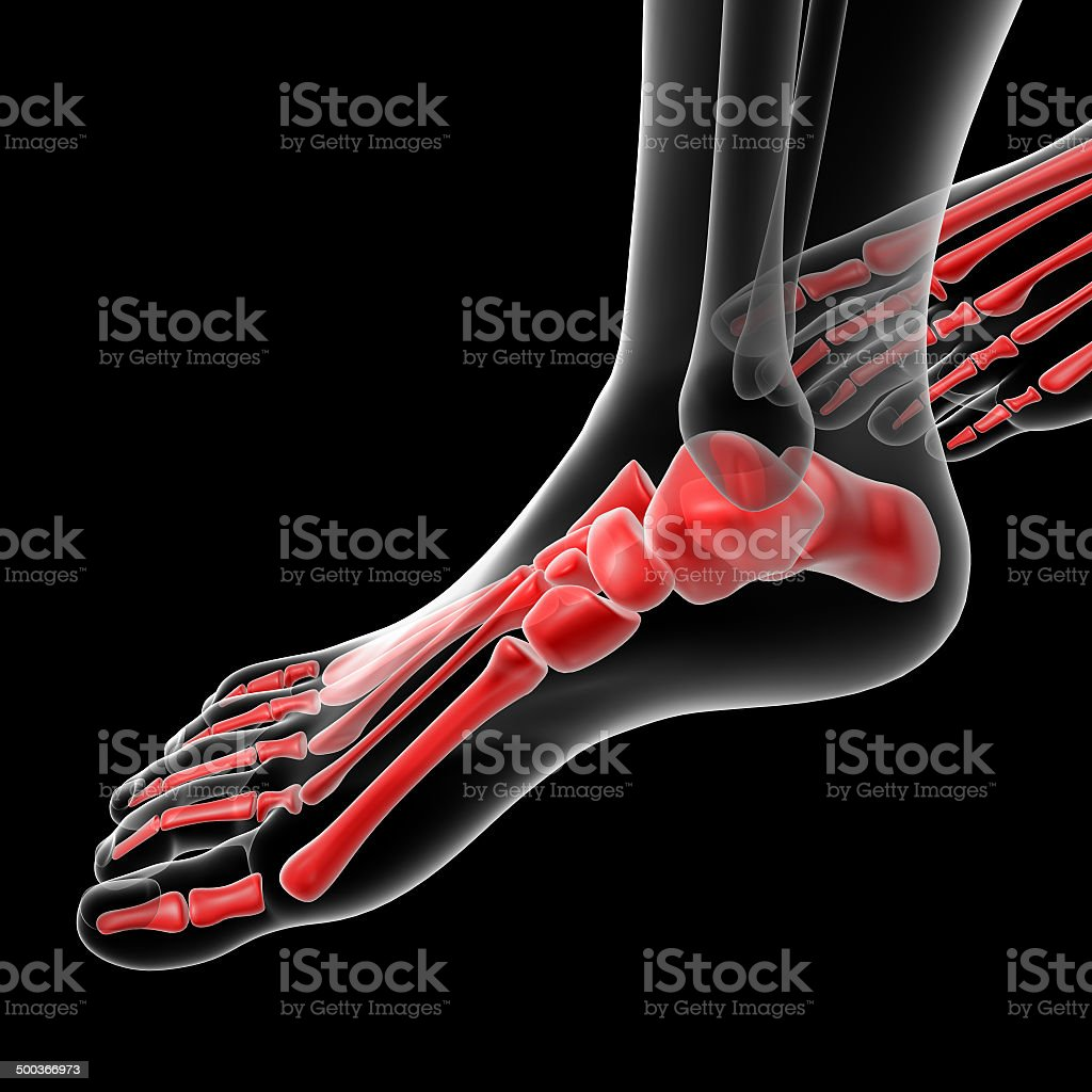 hight resolution of 3d rendered illustration of the female foot bone stock image