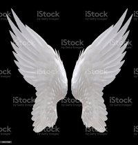 Angel Wing Stock Photo & More Pictures of Angel | iStock