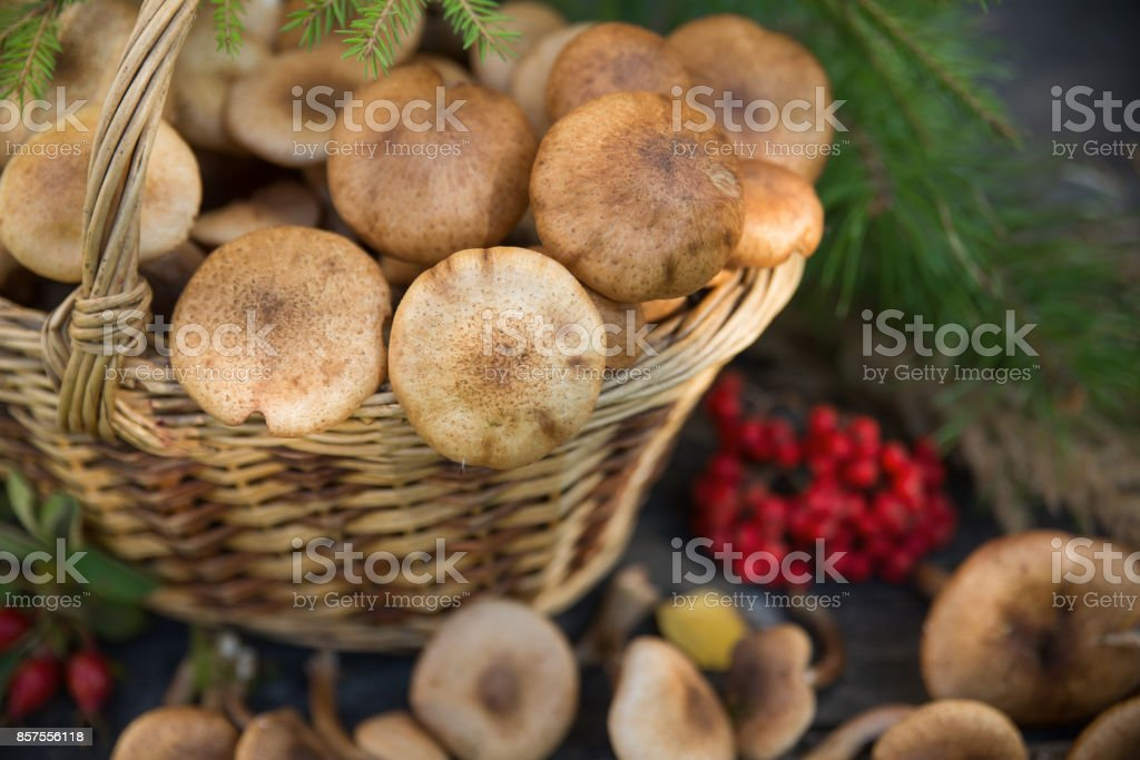 Old Mushrooms Still Good - All Mushroom Info