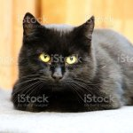 Beautiful Black Cat Is Lying On The Scratching Post And Looking To The Camera Stock Photo Download Image Now Istock