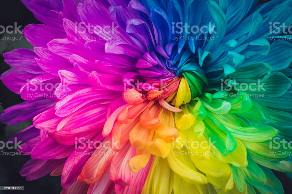 best colorful stock photos