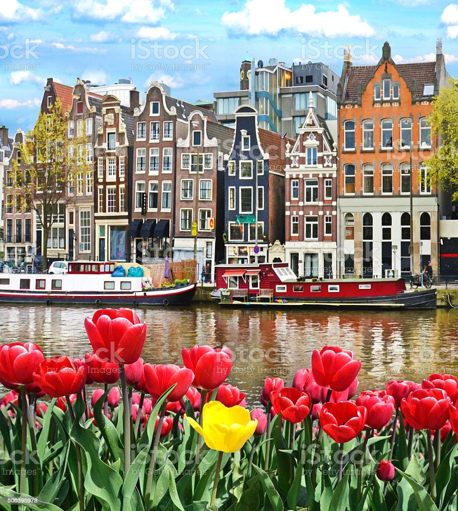 Wunderschne Landschaft Mit Tulpen Und Huser In Amsterdam