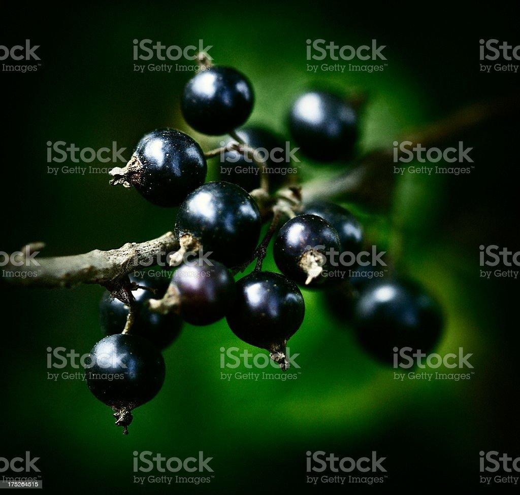 Cassis Fruit Banque d'images et photos libres de droit - iStock