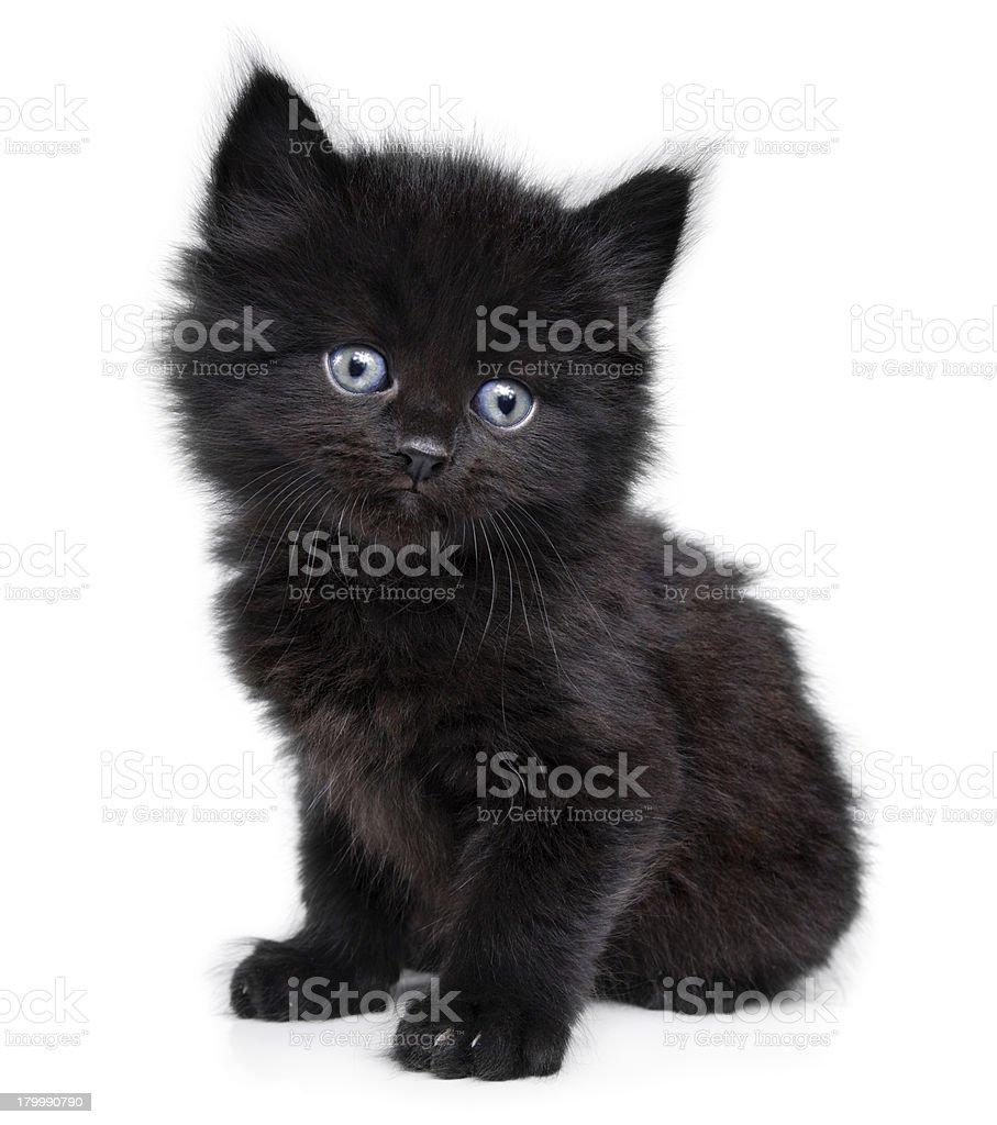best black kitten stock