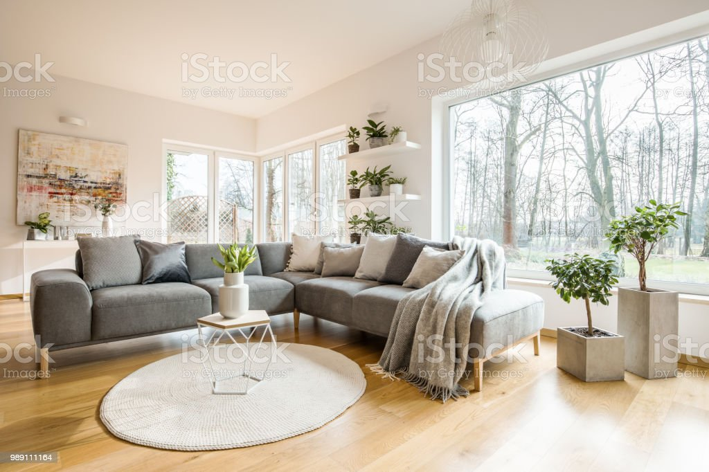 living room cushions formal drapes blankets and on corner grey sofa standing in white interior with fresh plants big window abstract painting stock image