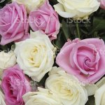 Bridal Bouquet In Pink And White Stock Photo Download Image Now Istock