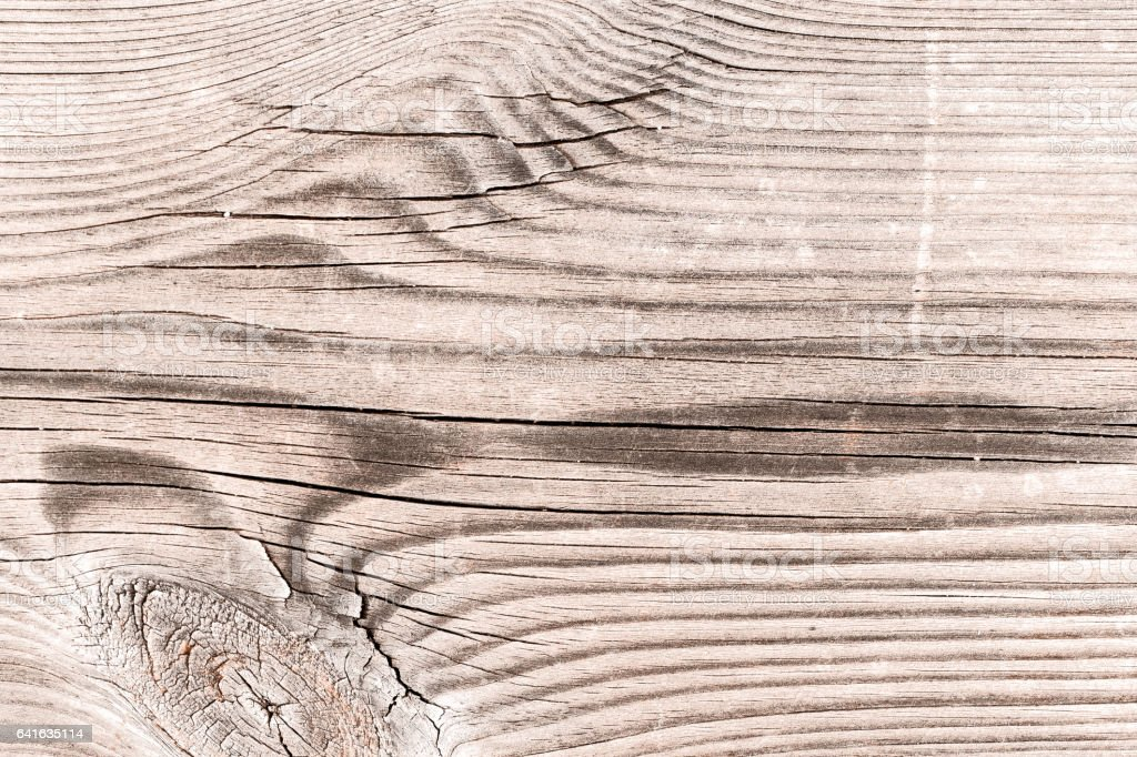 photo libre de droit de vieux brut en bois noue texture naturelle de fond plein cadre banque d images et plus d images libres de droit de anneau de croissance d un arbre istock