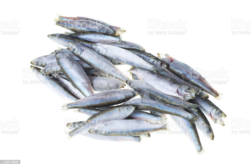 Bunch Of Frozen Sprat Fish Isolated On White Background Stock Photo - Download Image Now - iStock