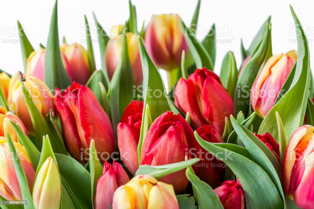 bunch of tulips bouquet