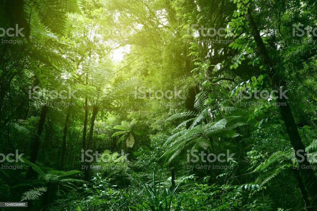 """— — — audio cd, august 12, 1997 """"please retry"""" 366 356 Tropical Forest Stock Photos Pictures Royalty Free Images Istock"""