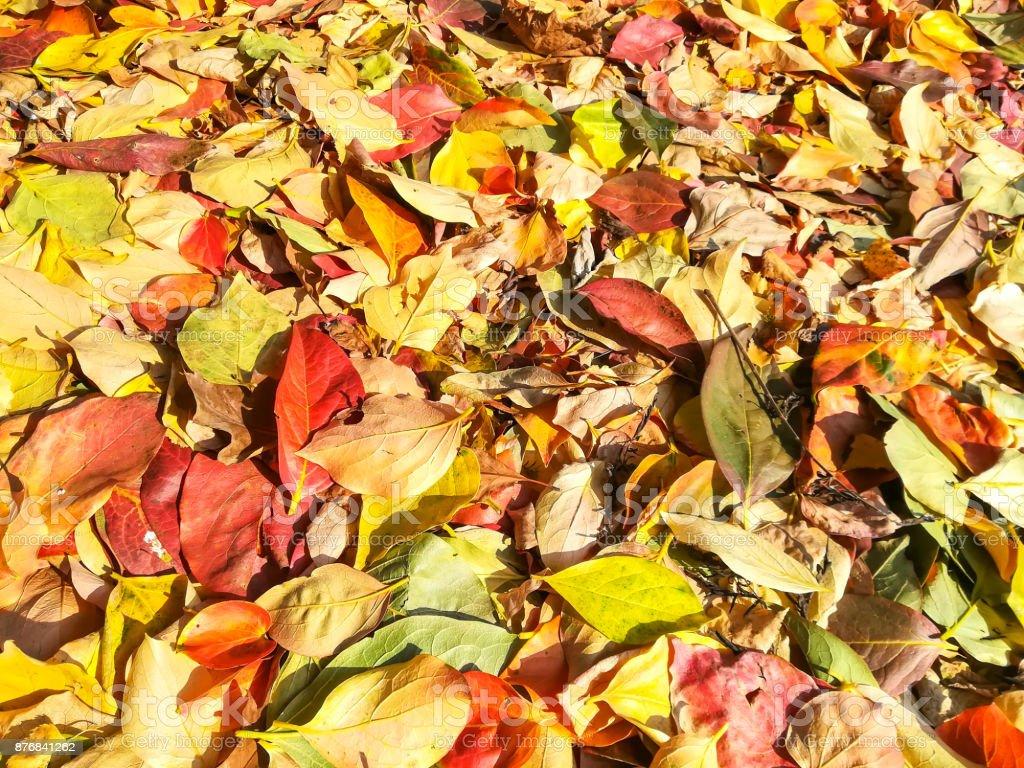 https www istockphoto com fr photo tapis de feuilles dautomne en plusieurs couleurs gm876841262 244713599