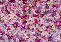 Carpet Of Beautiful Flowers Stock Photo & More Pictures of