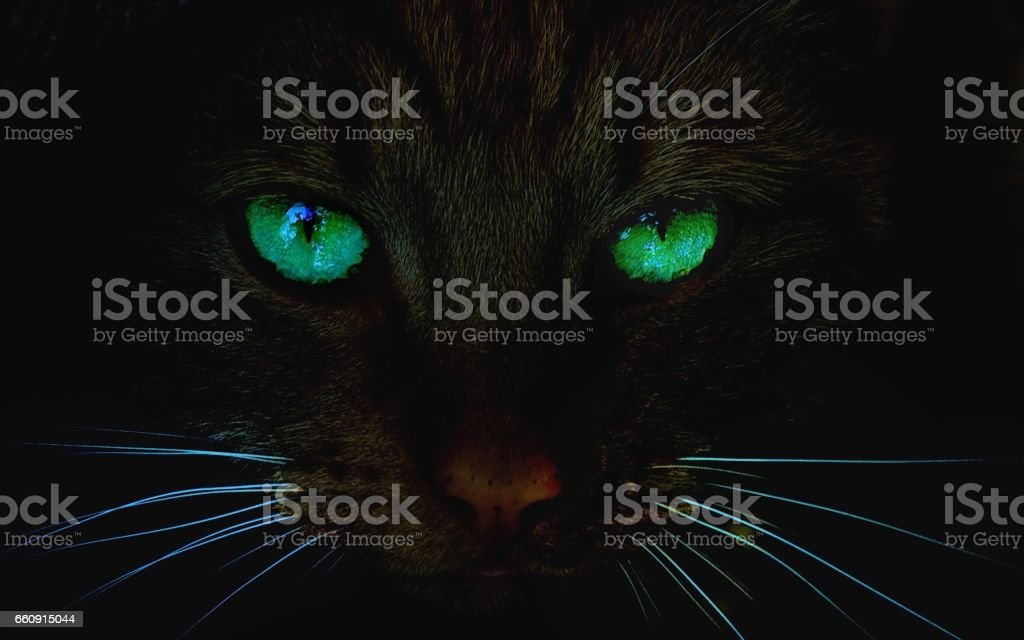 Top 60 Cat Eyes Stock Photos Pictures and Images - iStock