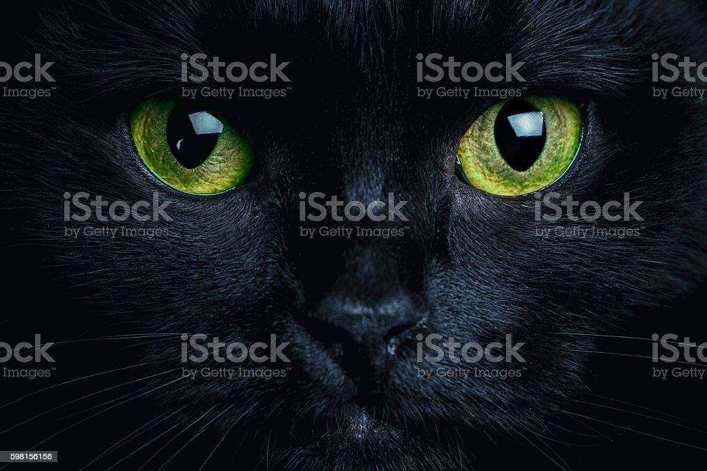 best cat eyes stock