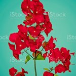 Chinese Hat Cup And Saucer Parasol Flower Mandarins Hat Holm Stock Photo Download Image Now Istock