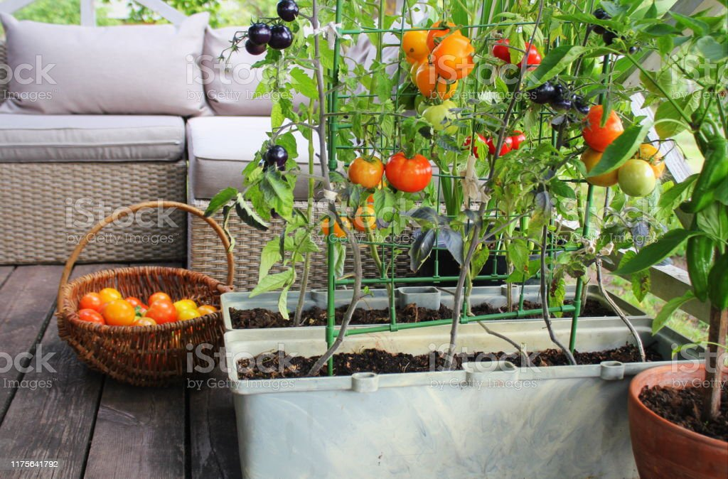 45 864 container vegetable garden stock photos pictures royalty free images