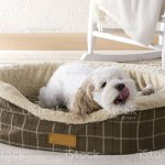 Cute Puppy Yawning In Dog Bed Stock Photo Download Image Now Istock
