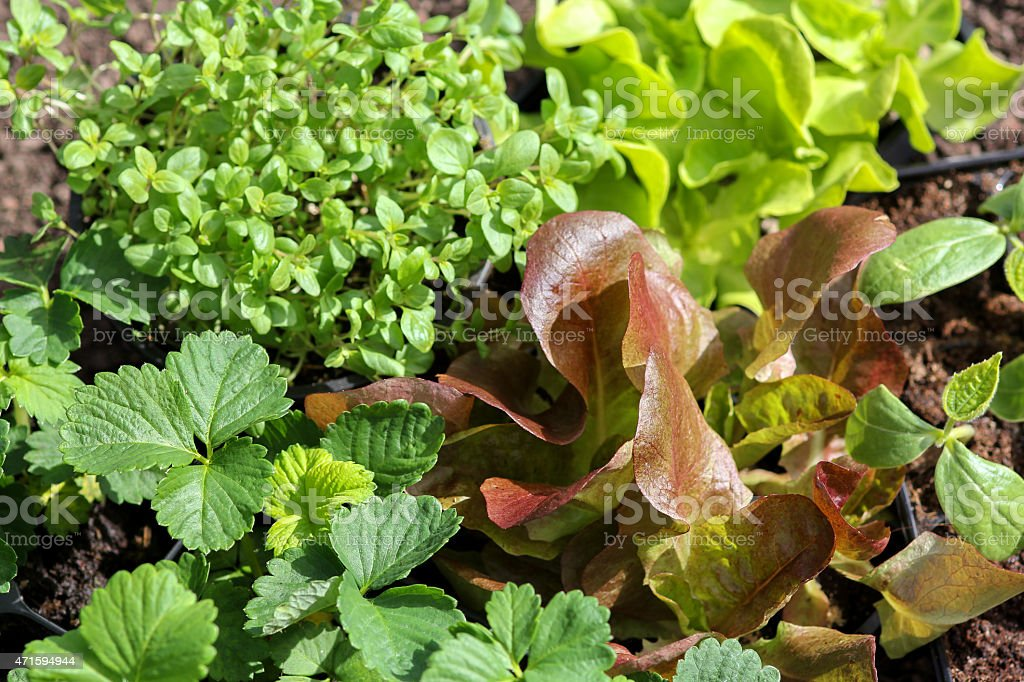 different seedlings stock photo