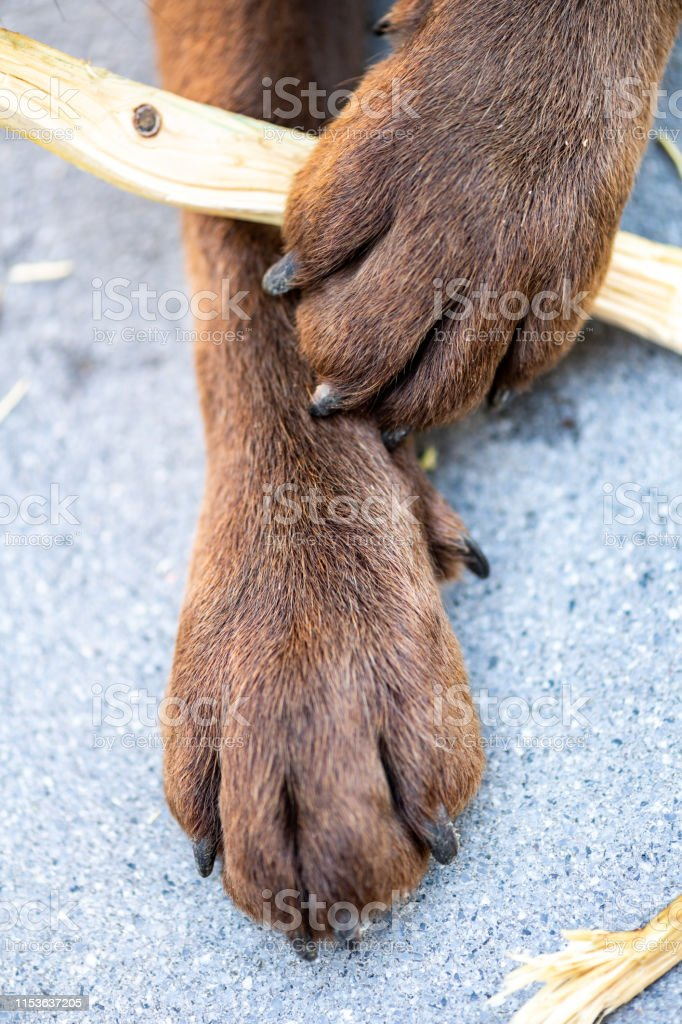 Stuck Foot In Mouth Stock Photos Pictures & Royalty-Free ...