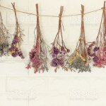 Dried Flowers Hanging On The Wallit Decoration Wall Of Living Room Stock Photo Download Image Now Istock
