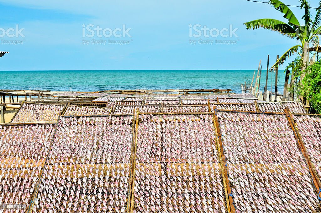 Dried Squid At The Fishing Village Thailand Stock Photo