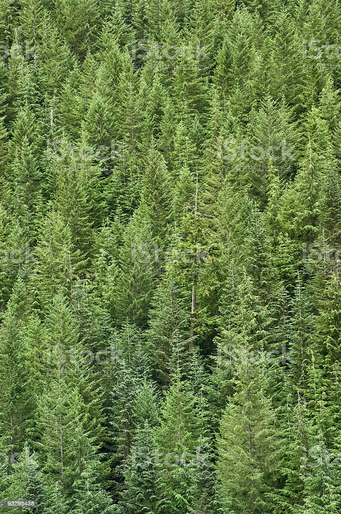 Download in under 30 seconds. Evergreen Forest Abstract Foton Och Fler Bilder Pa Barrvaxter Istock