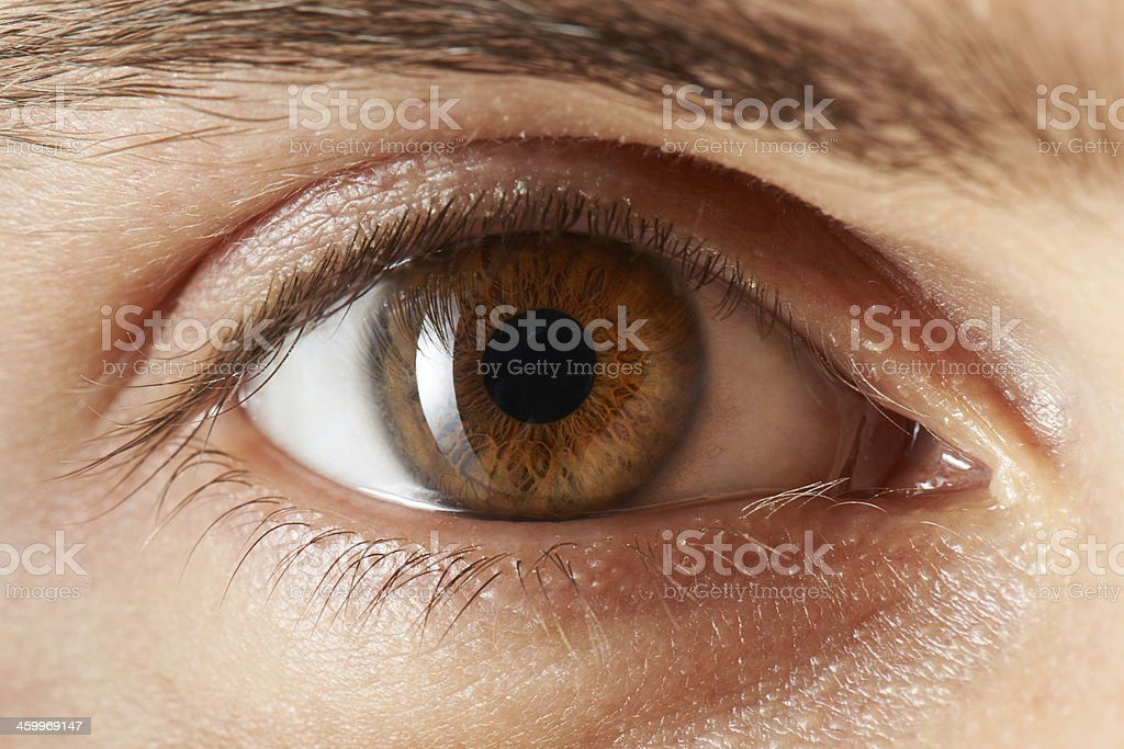 best brown eyes stock