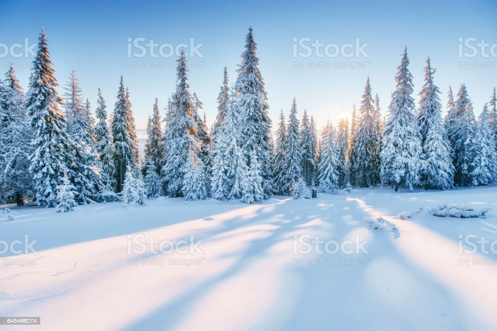 fantastic winter landscape magic
