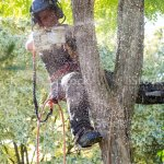 Female Arborist Climbing A Tree Stock Photo Download Image Now Istock