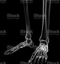 female skeleton foot royalty free stock photo [ 768 x 1024 Pixel ]