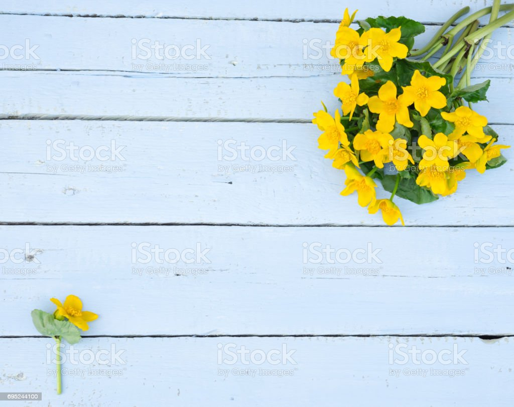 first spring flowers wildflowers